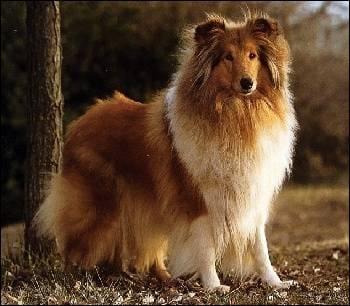 Quiz | Connais-tu les chien du cinéma?