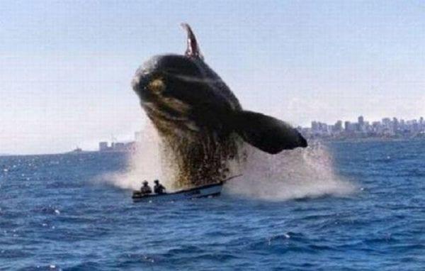 Baleines non-tueur
