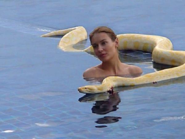 Le Whisperer de Python