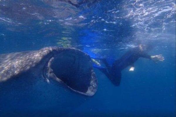 Natation avec les baleines