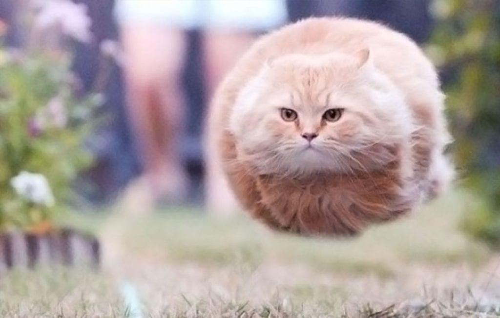 Une fusée à chat furry