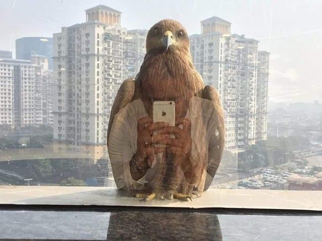 11. Un aigle vraiment connecté…