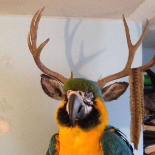 7. Les perroquets ne sont pas ce que tu penses
