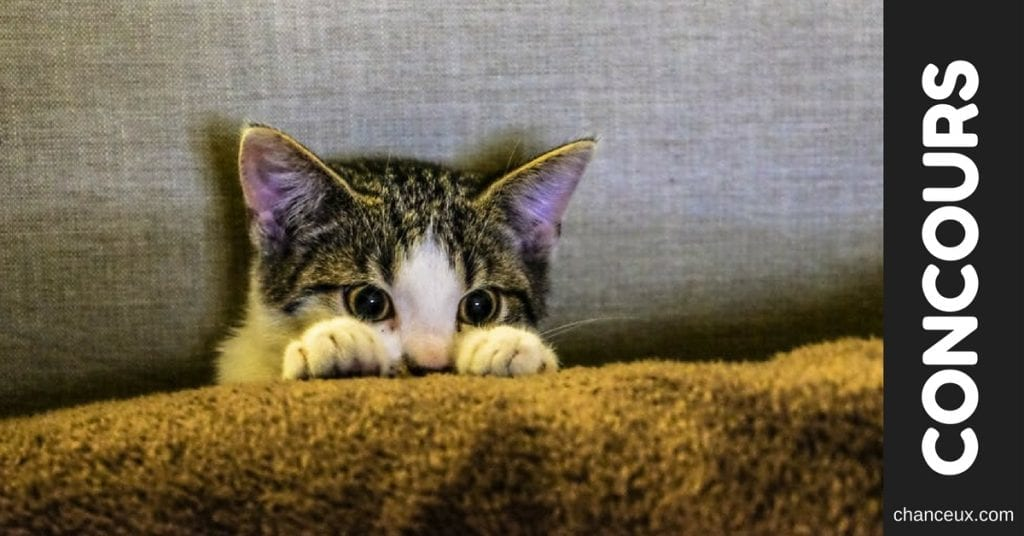 "Gagnez une cachette pouf ""Dream & Dare"" pour ton chat!"