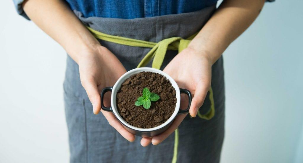 Tirer le maximum de ces cinq fines herbes à cultiver dans votre jardin