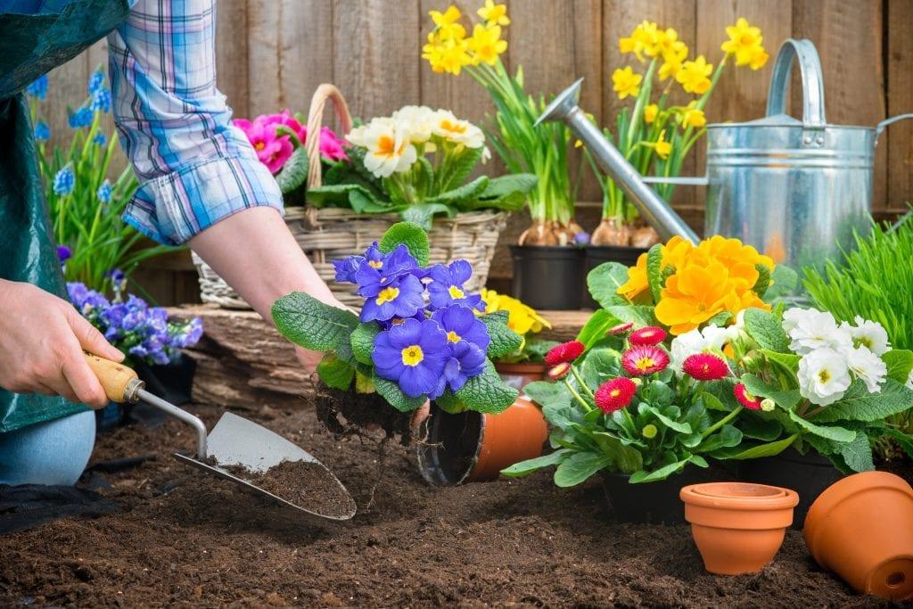 Guide rapide pour un magnifique jardin d'été