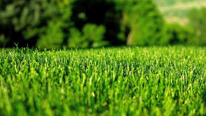 Les consommateurs cherchent des outils d'entretien des pelouses