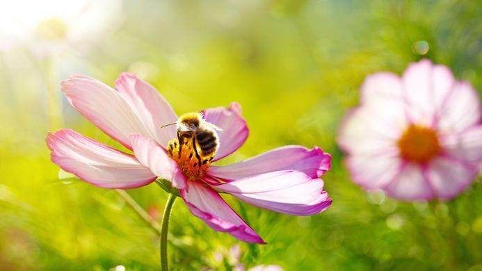 Saviez-vous que vous pouvez aider les abeilles à continuer de bourdonner
