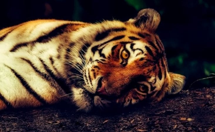 Endangered animals in the world!