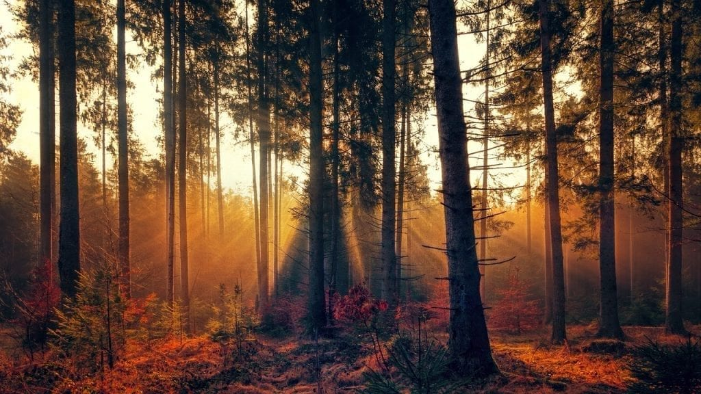 Tips for overcoming the autumn blues