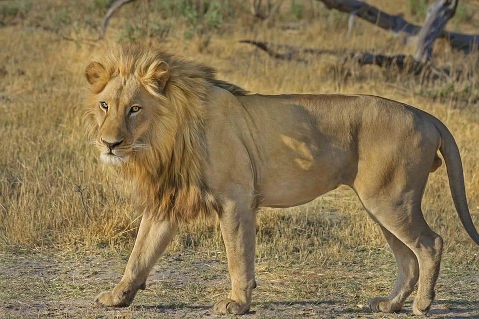 Visitez en Afrique Le Botswana