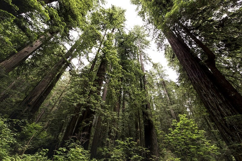 parc national de Redwood