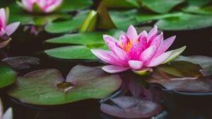 Les fleurs de la chance - Besoin d'attirer la chance dans votre vie